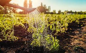 Товары и семена для органического садоводства