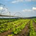 Новейшие автоматизированные технологии в растениеводстве